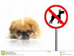 no pets sign pug